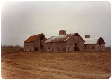 Three Barns on John M. Dowdy Farm