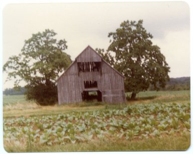 Barn and Tobacco Field