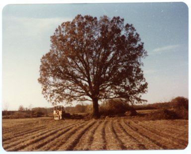 Tree on Heady Farm