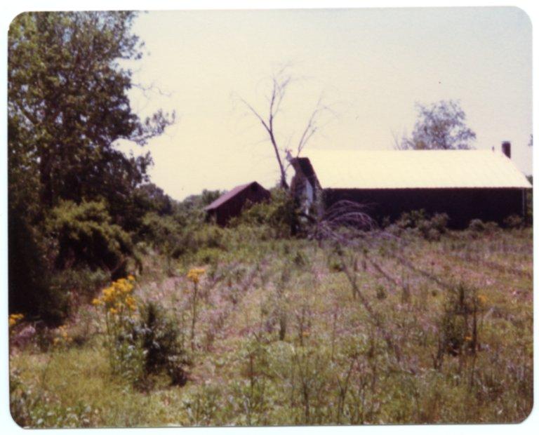 Barns on the Fred Sisk Farm
