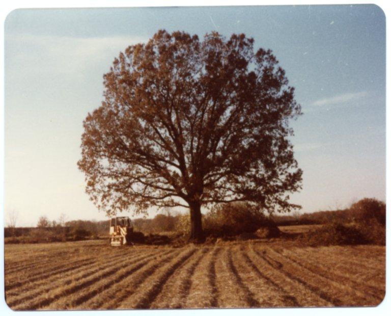 Tree on Heady Farm