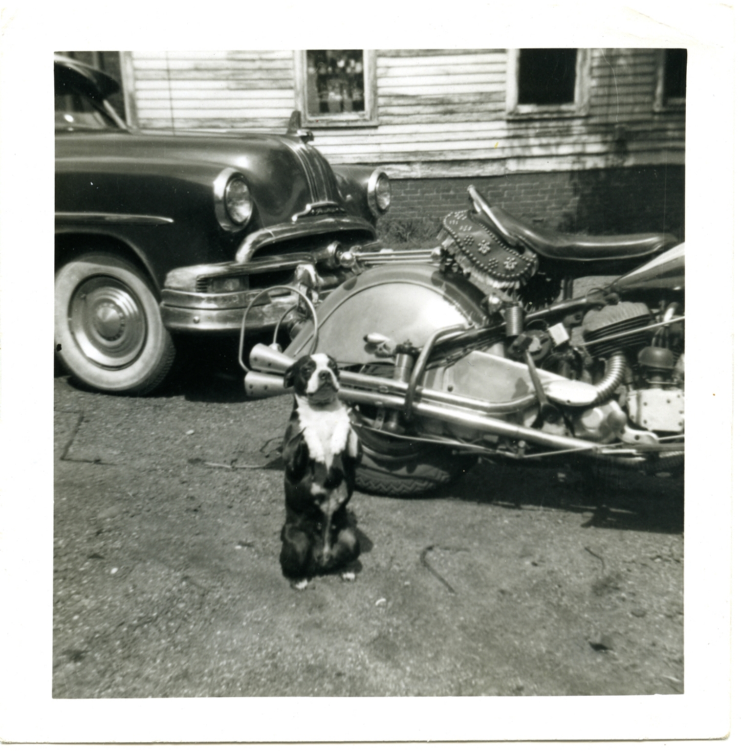 The Dog and the Motorcycle