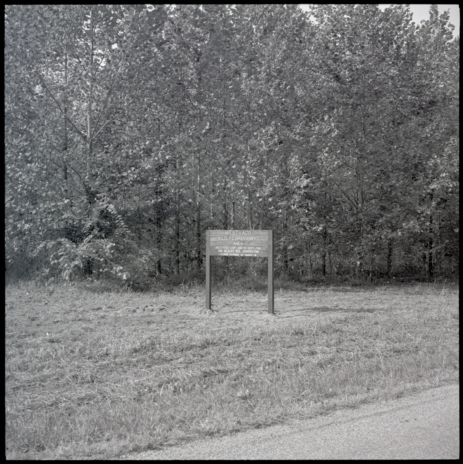 Photograph of the Westvaco Wildlife Management Area.