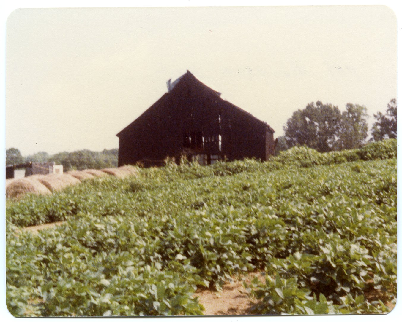 Barn on the Pat Robinson Farm